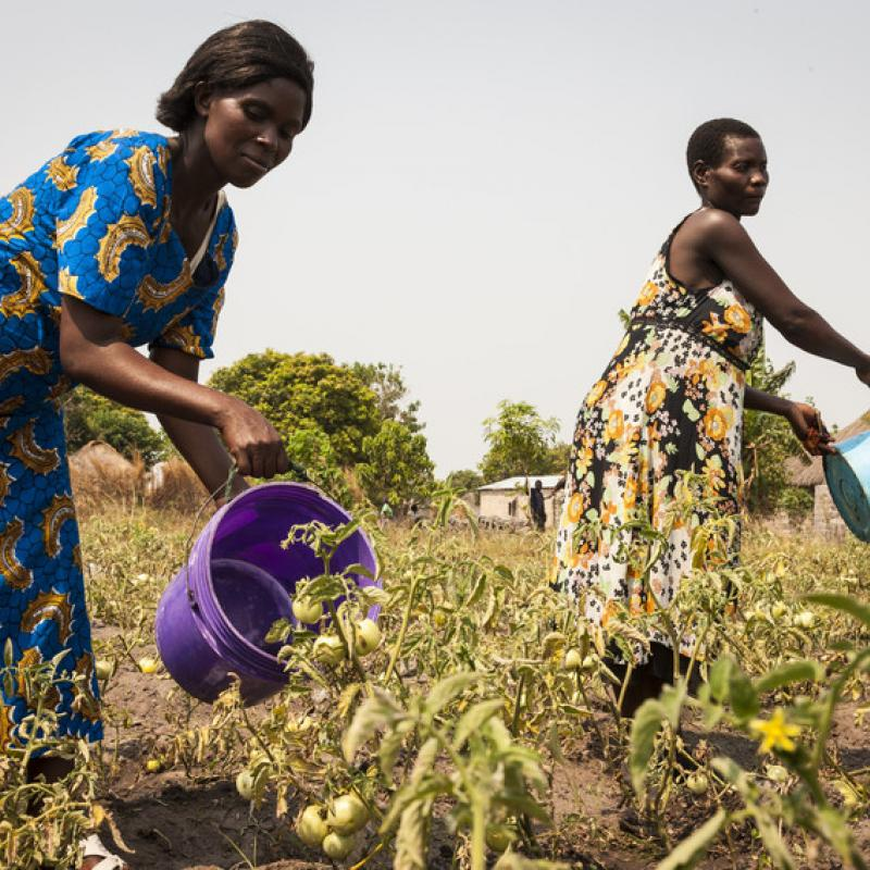 Women suported by VSO water their crops in Zambia