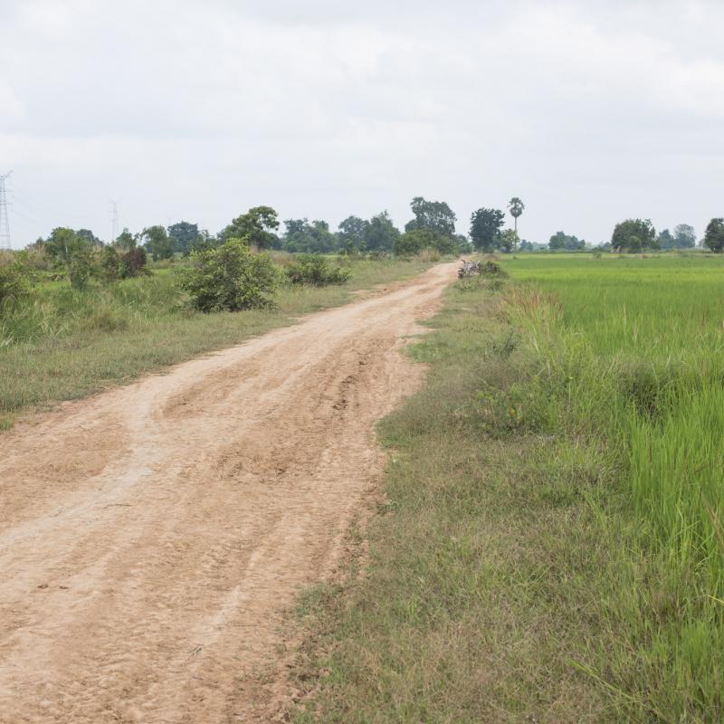 Cambodian field