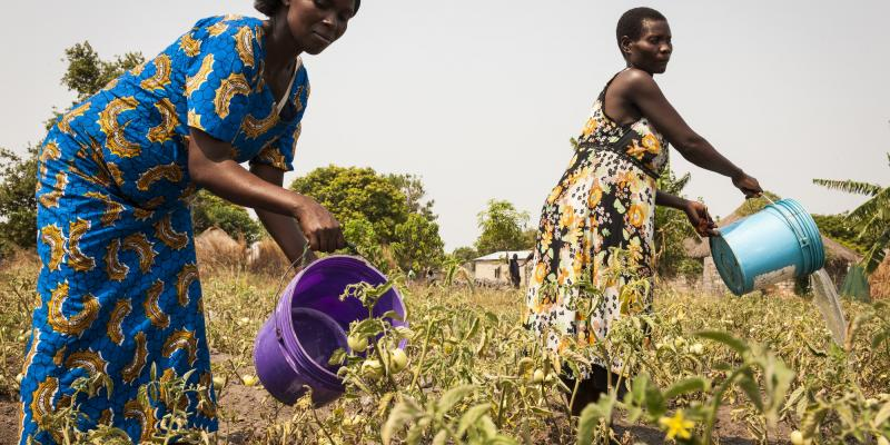 Economic Empowerment (EE) support group members Cecilia age 39 (L), and Alice, age 40, water their allotment in Kabanga, Samfya, Zambia