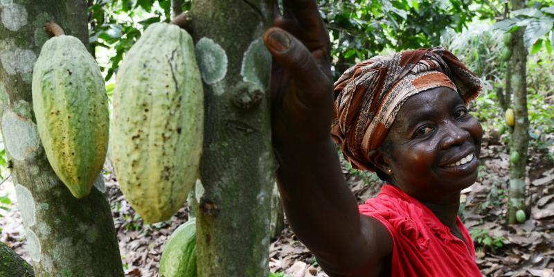 Abiba Cocoa Life