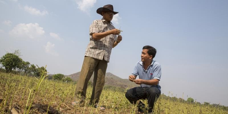 Volunteer Giovanni Villafuerte inspecting the crops and earth in the paddy fields of Banan in Cambodia