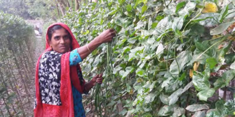 salima in Bangladesh