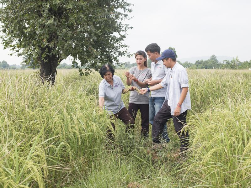 volunteers and rice farmers in Cambodia