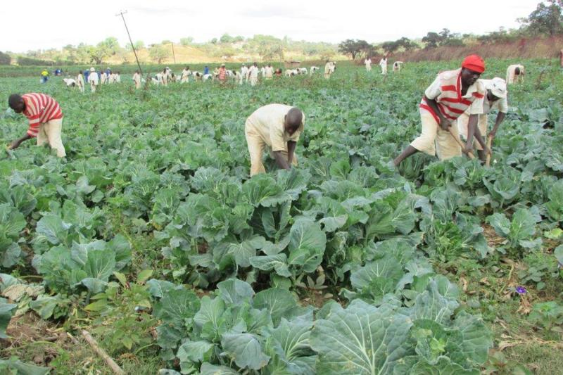inmates working in the fields to provide food for the prison