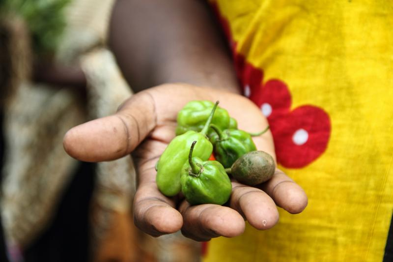 Chilies from a women-run farm supported by VSO's CASH project, Zanzibar
