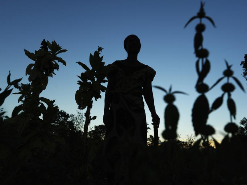 Eililoy Kamwendo stands in her patch of farmland at dusk.