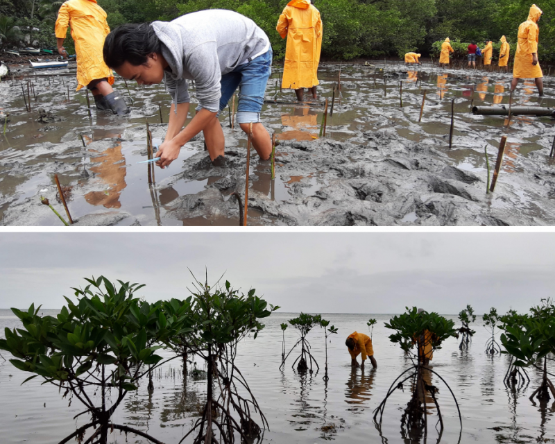 Mangrove planting in the Philippines to protect coastal communities, to tackle  climate change and more volatile weather patterns, storms and to improve ecosystems. This photo was taken during the youth-LED project in Brgy.