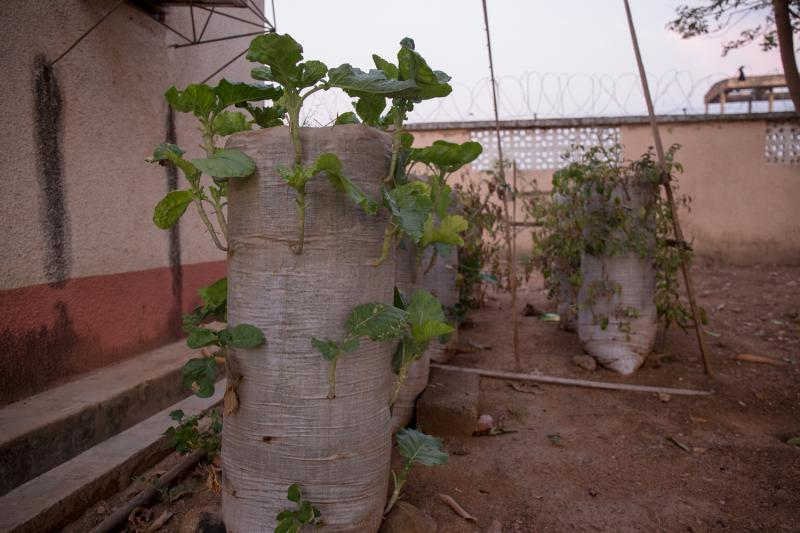 old sacks are used to grow crops efficienty in Ghana