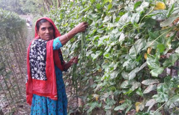 Salima Begum with her crop of yard long beans.