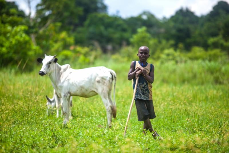 Young African cattle herder in the fields with his livestock